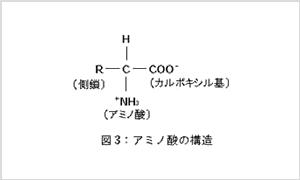 酵素の構造