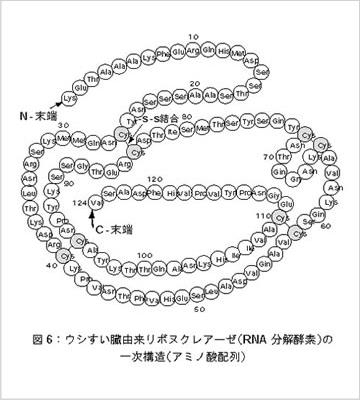酵素たんぱくの一次構造