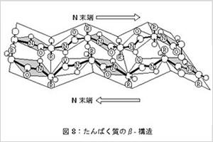 タンパク質のβ-構造